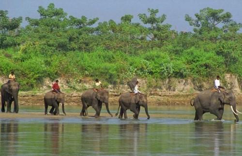 Safari dans la réserve faunique de Parsa