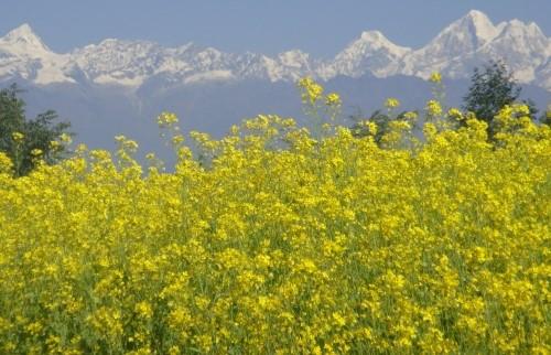 Visite du village de Shivapuri et Kakani