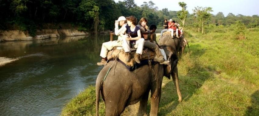 Сафари в джунглях - Jungle Safari in Chitwan