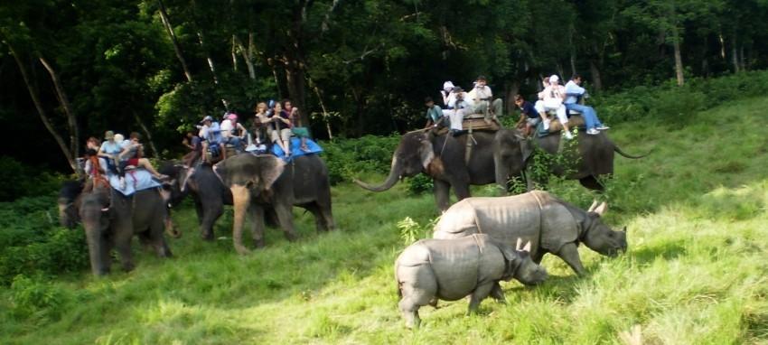 Сафари в джунглях Читвана - Сафари в джунглях Читвана