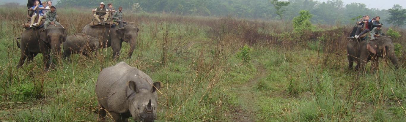 Сафари в джунглях - Национальный парк Читван