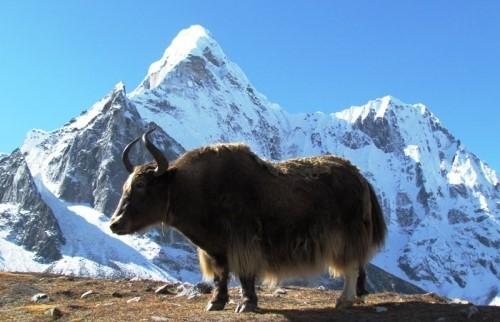 Панорамный поход по окрестностям Эвереста