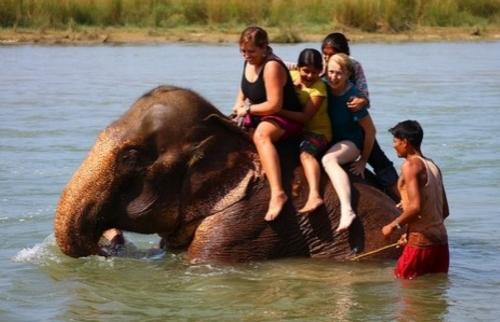 Сафари в джунглях Читвана